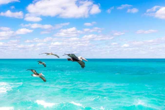 blue ocean.jpeg